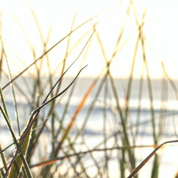 Sea-grass horizon. Photo by Kim Vecie